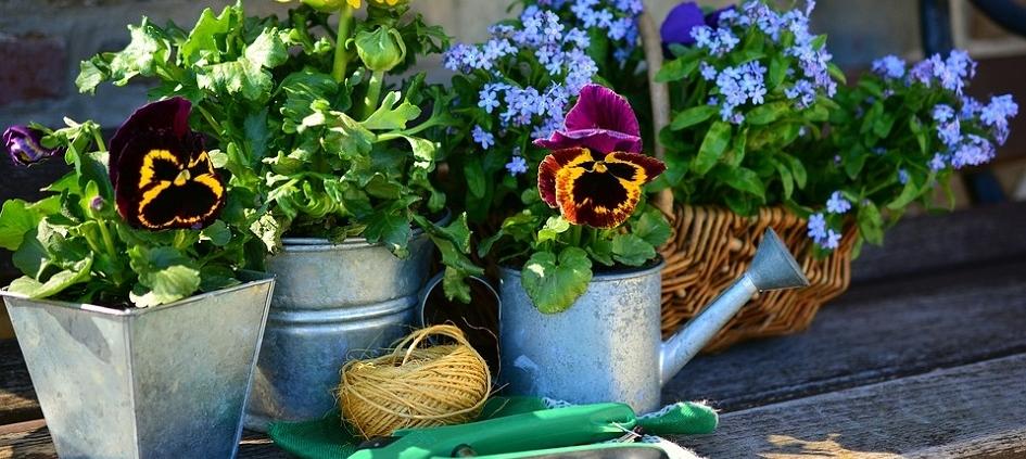 Mostra di piante e fiori